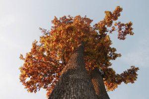 Jesenná fotosúťaž má víťazov