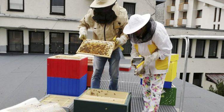 Najvyššie položená včelnica u nás, včelnica na hoteli FIS