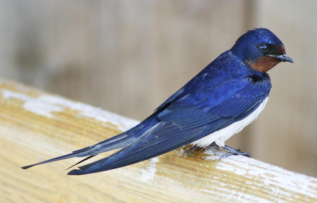 Okrídlení pútnici, vtáčia migrácia