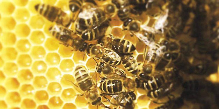 Víkend na Agrokomplexe Nitra, včely