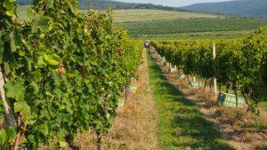 vinárstvo na Tokaji GRAND BARI