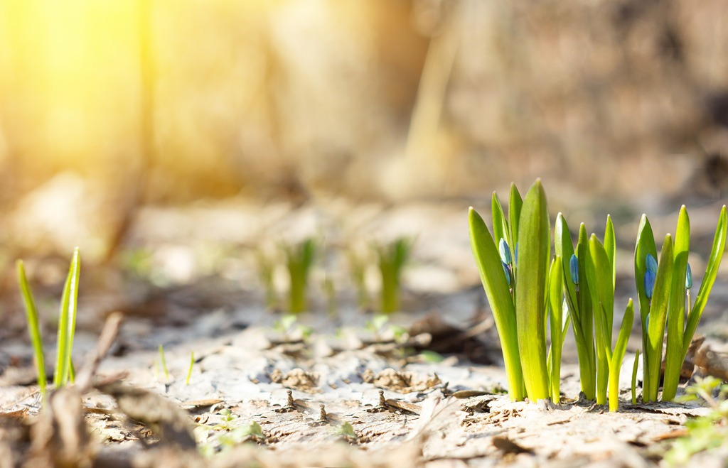 Minikurz Spoznávania liečivých rastlín