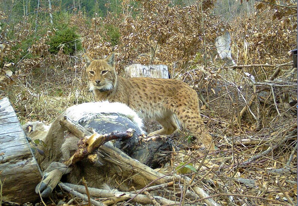 ochrany prírody