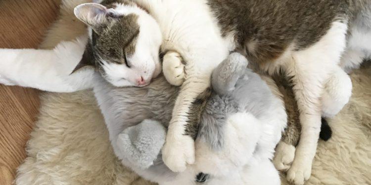 Prírodná podpora imunity domácich zvierat