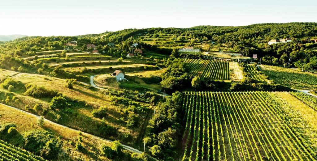 Malokarpatské Vinohrady