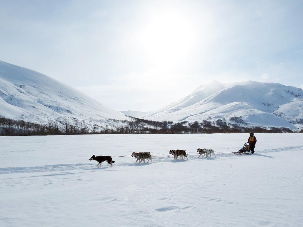 Adrenalínové zimné zážitky, psi zaprah