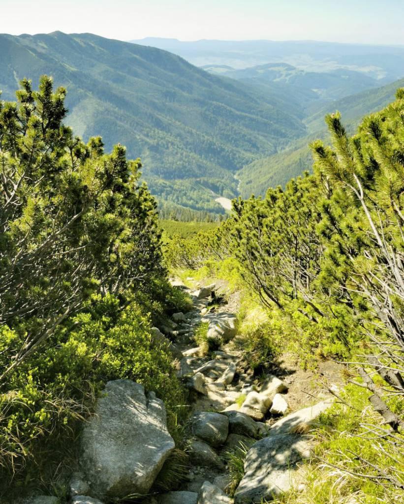 Chodník kosodrevinou na Chopok