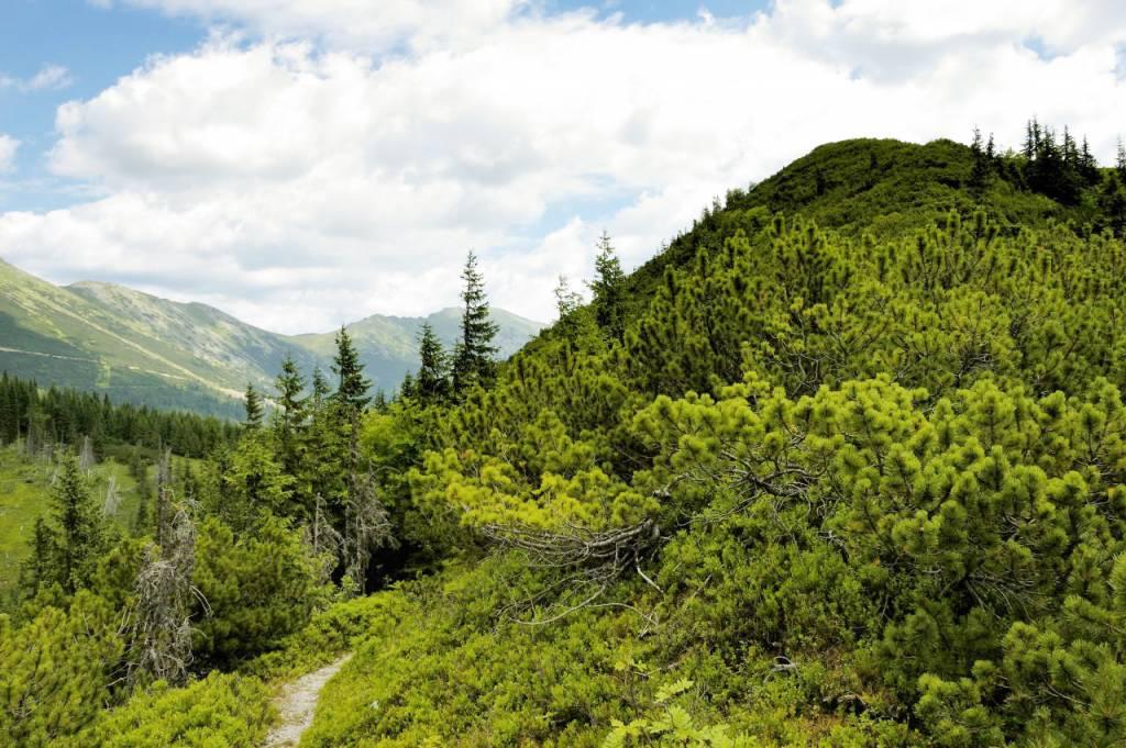 hrebeň Nízkych Tatier z Pálenice