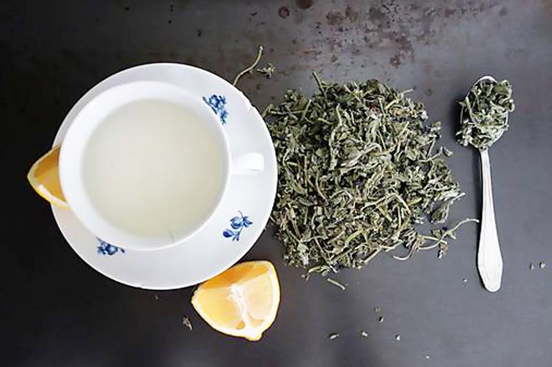 Pľúcnik lekársky čaj proti jarnej unave