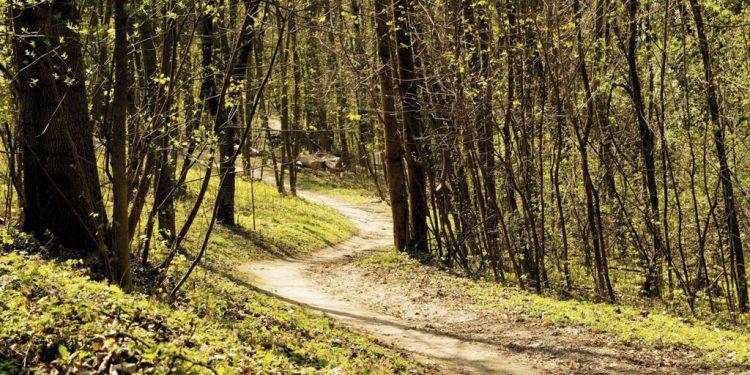 Trenčania radi dýchajú čerstvý vzduch v lesoparku Brezina