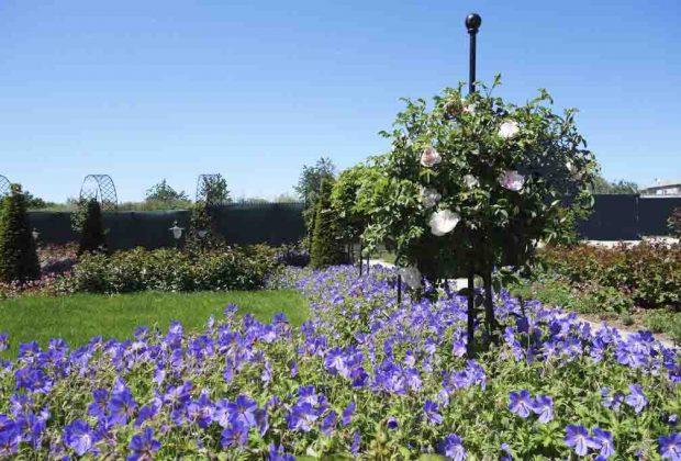 Súkromné rozárium v Dolnej Krupej, ruže