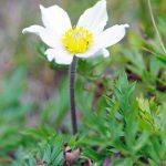 Tatranský národný park, kvetiny