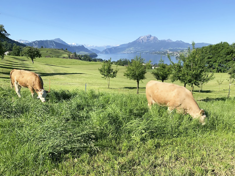Záhorák na cestách, Rigi – kráľovná hôr vo Švajčiarsku
