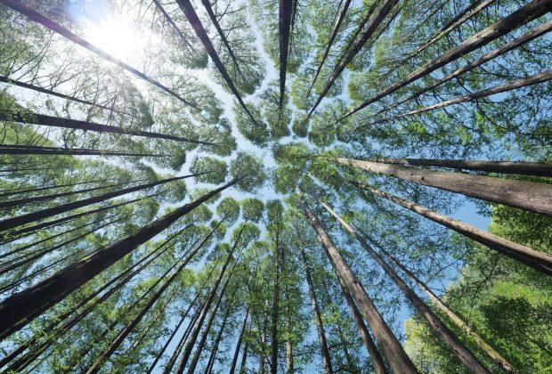 Prvá vernisáž v SNM po vynútenej prestávke V lese