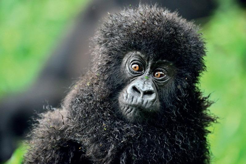 Pekelný raj Potulky africkou divočinou, afrika opica