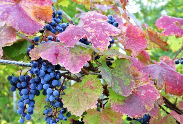 Krížny vrch – miesto troch chotárov, staručké viničné domčeky a poviedky zahalené rúškom tajomstva, vinic