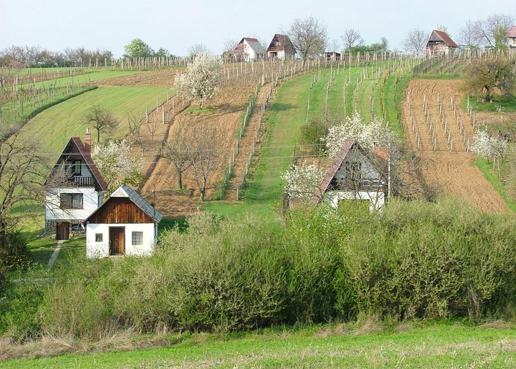 Pohľad na vinice na Krížnom vrchu