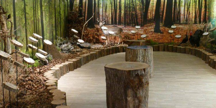Prvá lesná škola na Slovensku otvára svoje brány. Dar pre deti v Leviciach, kde les prišiel do mesta