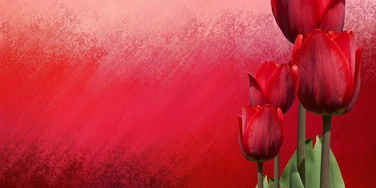 En ten tulipán - detektívka Agathy Christie po prvý raz v slovenčine