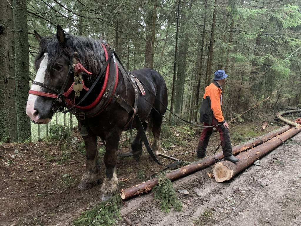 Kone a lesy, Slovensko, enviro, kultúra, história