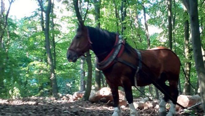 Kone a Lesy SR