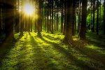 Lesy SR 150 rokov