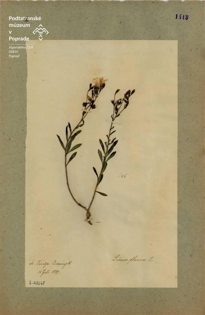 Herbárová Položka ľanu žltého Zo Zbierky V. Greschika, leikon, enviro