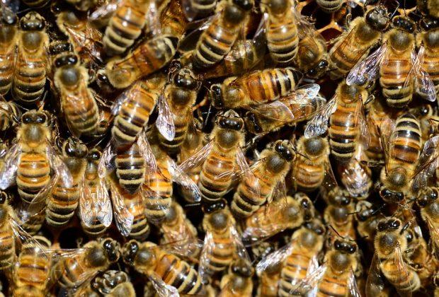 SOŠ Pod Bánošom , včely